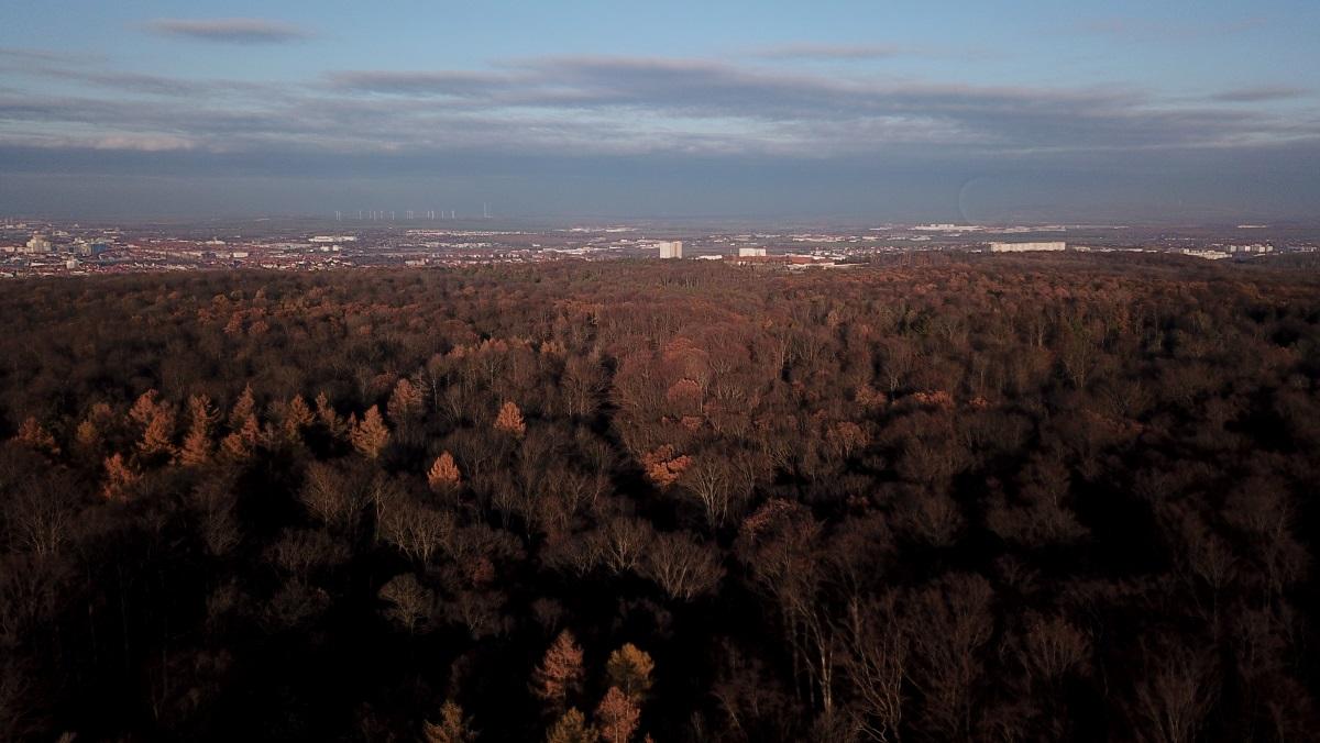 Der Erfurter Steiger - Wald im Stadtgebiet
