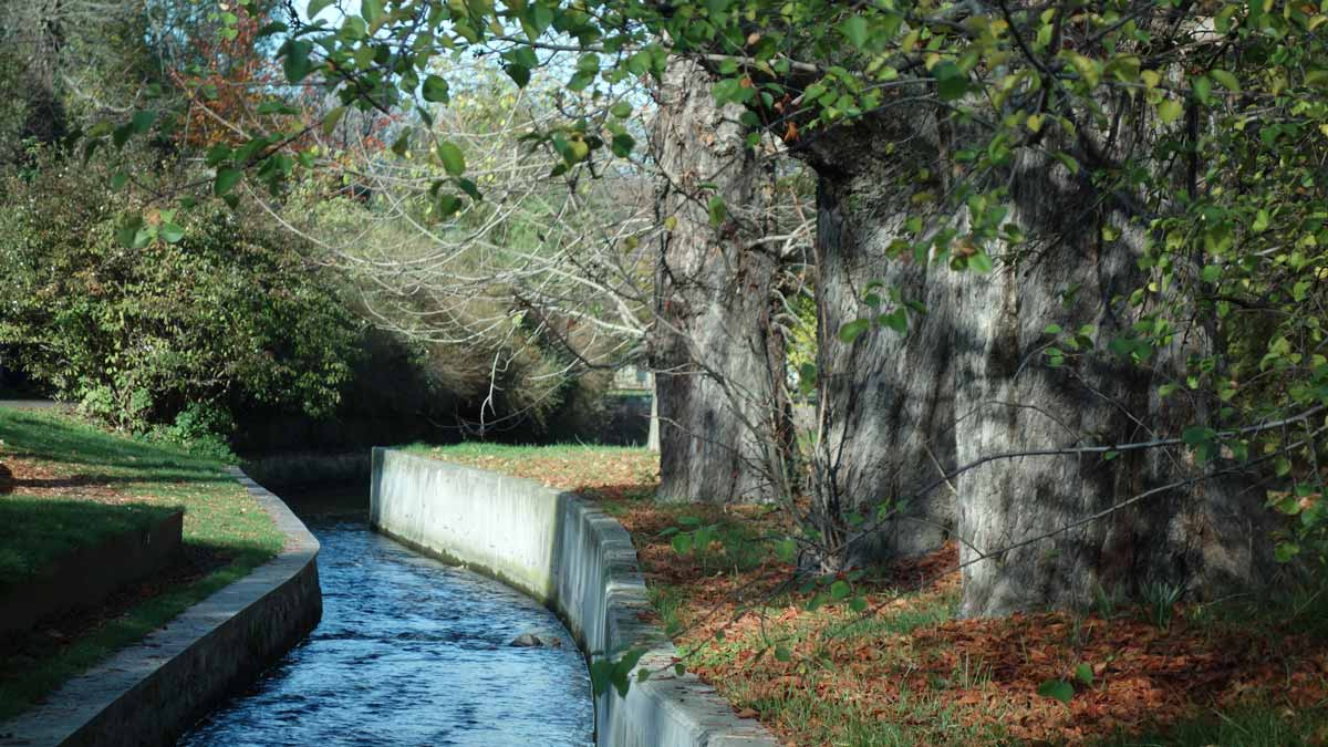 Kanal und alte Bäume im Venedig Erfurt.