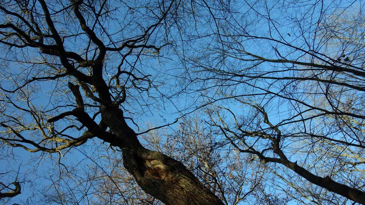 Bäume im Steiger Erfurt in der kalten Jahreszeit