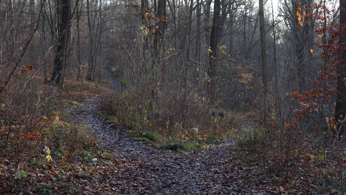 Schmale Wege im Steigerwald Erfurt