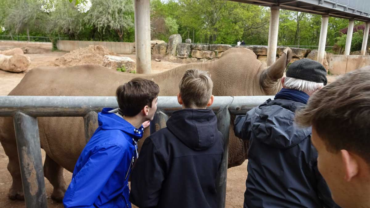 Berberaffen im Erfurter Zoo