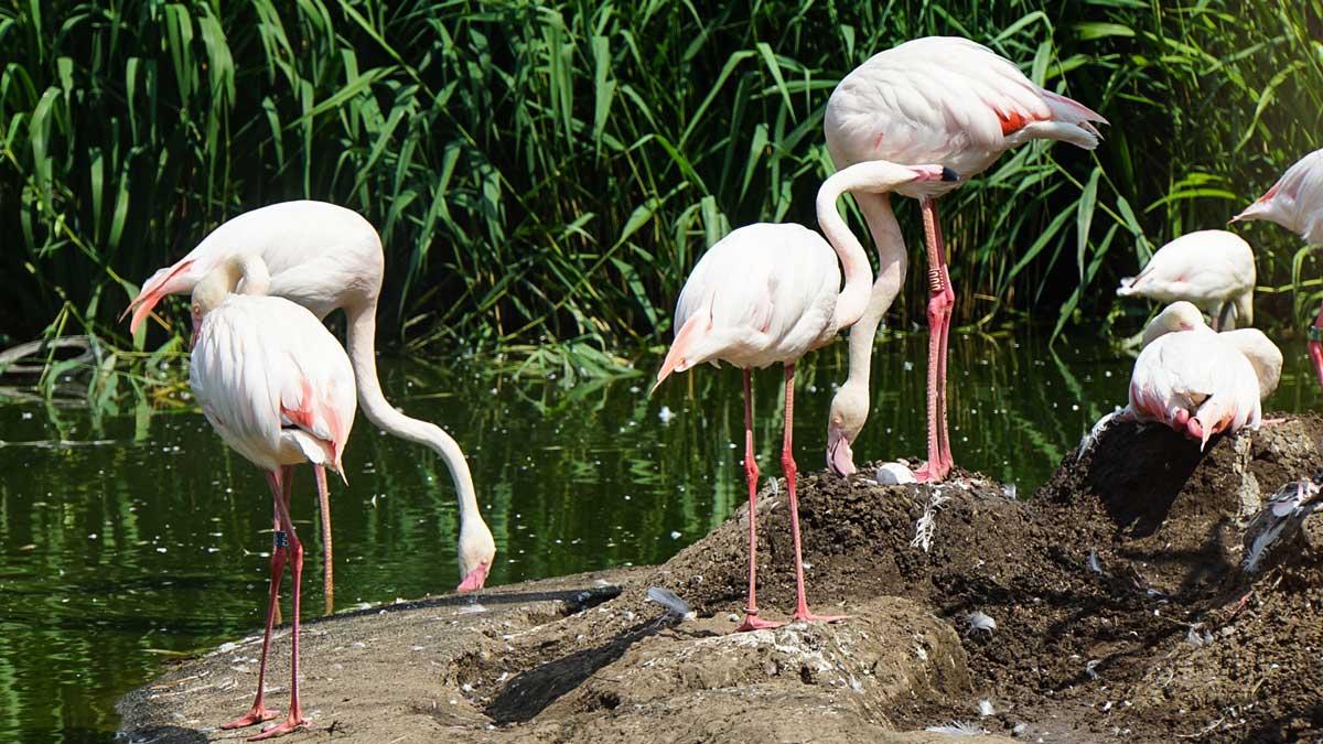 Erfurt Zoo Flamingo-Gehege