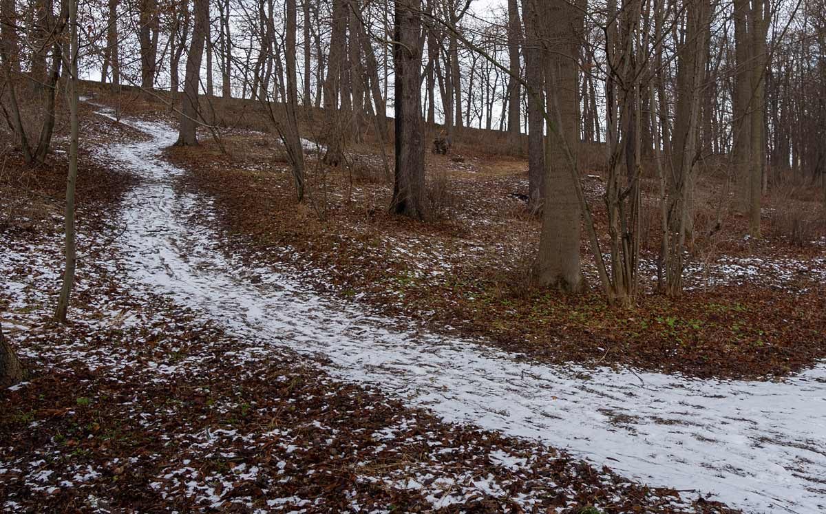 geschwungene Wege statt Symmetrie kennzeichen die Wegeführung im Park von Molsdorf