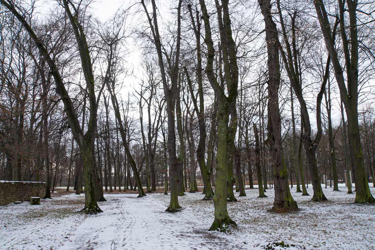 Bäume auf dem Gelände des denkmalgeschützten Ensembles aus Schloss und Park Molsdorf