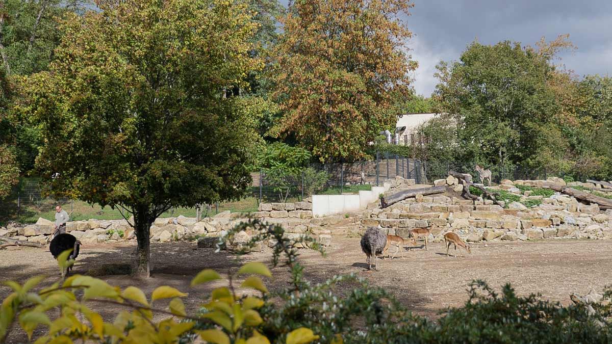 Gehege Afrikanische Steppe im Zoopark Erfurt