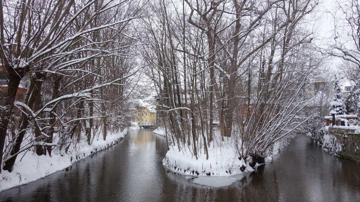 Eine Insel des Breitstromes Erfurt im winterlichen Kleid.
