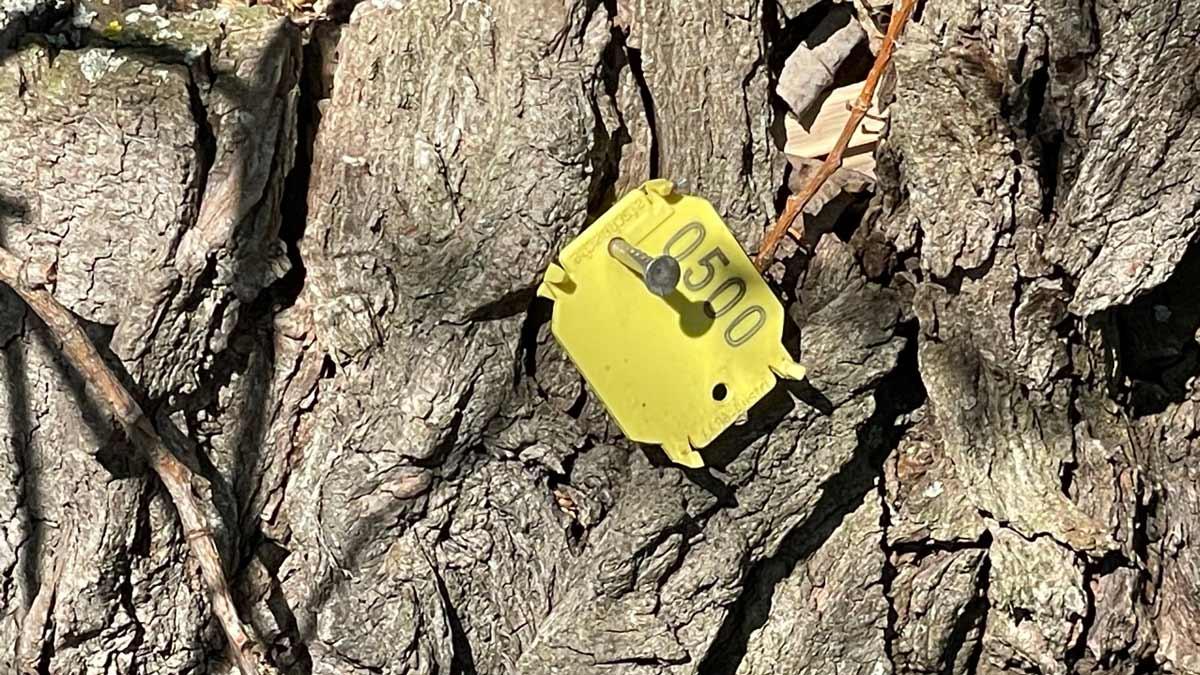 Geschützer Landschaftsbestandteil in Erfurt mit nummerierten Bäumen